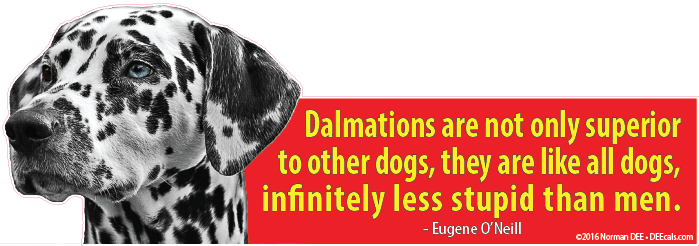 Less Stupid dalmation, dalmations, dog, dogs, superior, stupid, infinite, infinitely, man, men, people, human, humans, person,